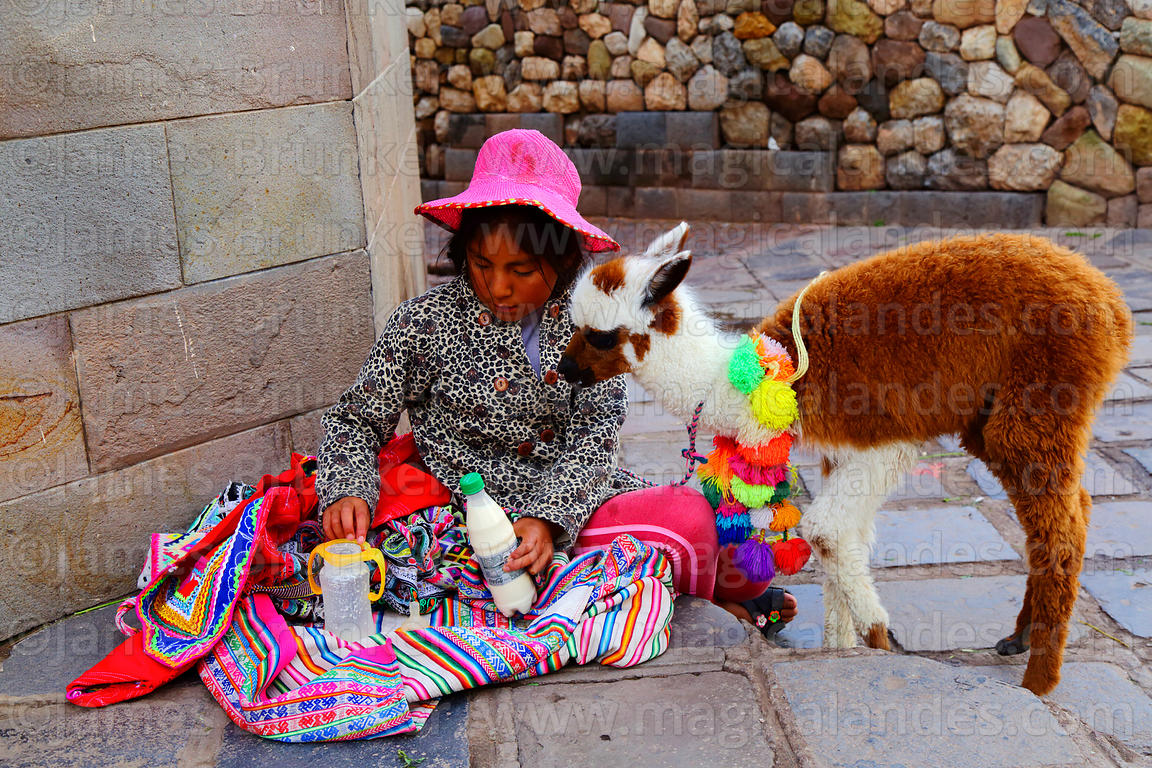 Quechua girl sitting on pavement preparing milk for her pet baby alpaca (Vicugna pacos), Cusco, Peru
