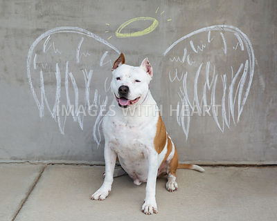Dog_With_Chalk_Art_Angel_Wings