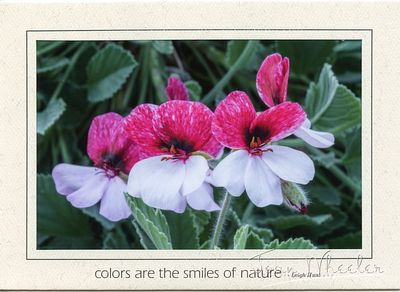 greeting_cards283
