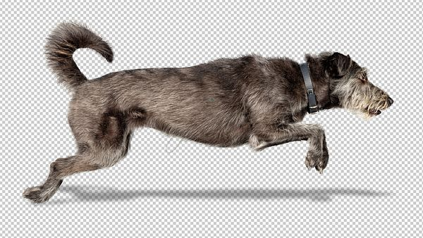 Dog Leaping Isolated on White