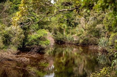 Dense jungle along Ship Creek on South Islands lush west coast.