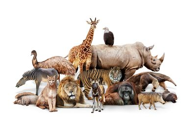 Phoenix Zoo Animals Composite