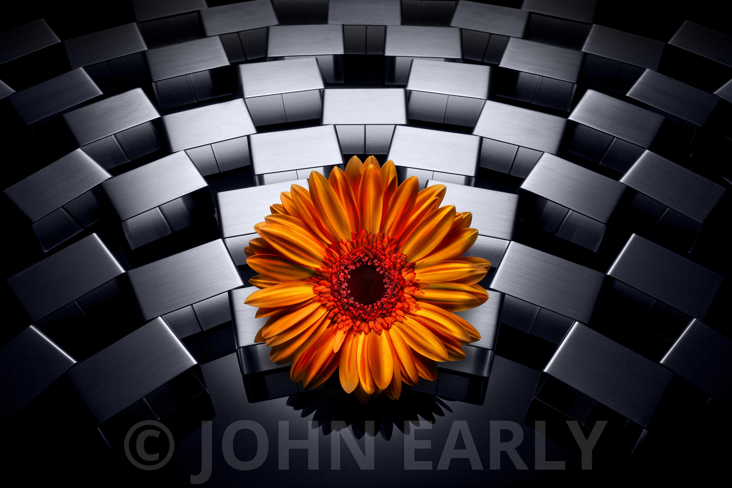 Flower On Steel