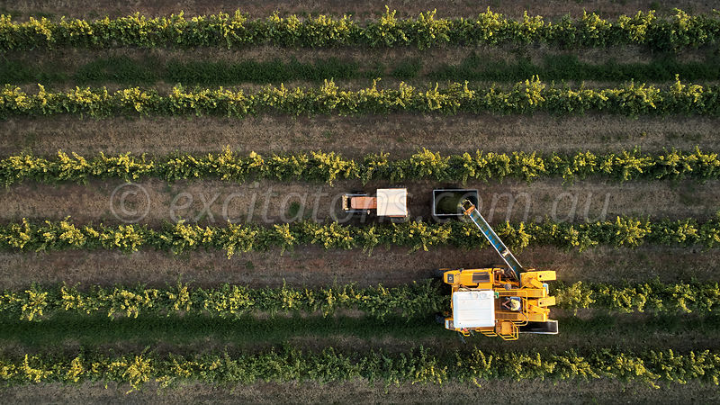 Aerial grape harvester working in vineyard, Australia.