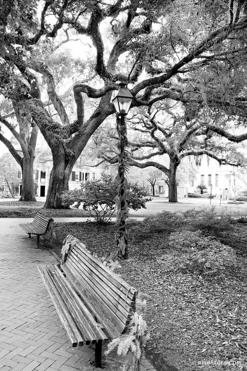 PARK BENCHES CHATHAM SQUARE LIVE OAK TREES SAVANNAH GEORGIA BLACK AND WHITE VERTICAL