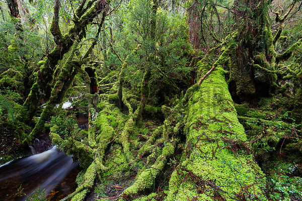 Cool Temperate Rainforest and Stream