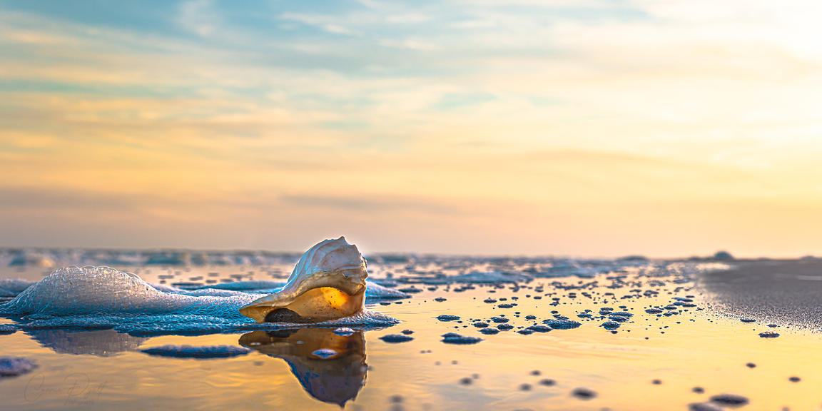 Shell at Sunset