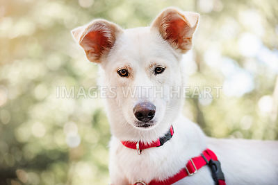 Curious White Dog with Soft Leafy Background