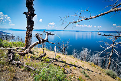 View Through the Trees, Yellowstone Lake. Yellowstone National Park.