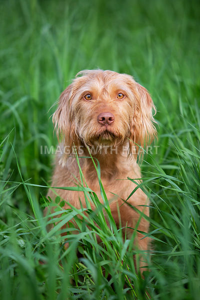 Close_Up_Of_Dog_Sitting_In_Grass