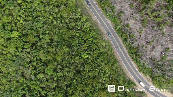 Tracking a Car on Road in Forest Loiza Beach Puerto Rico Drone Aerial View