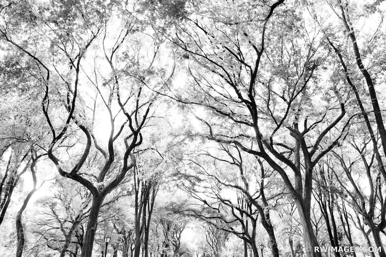 POET'S WALK CENTRAL PARK MANHATTAN NEW YORK CITY BLACK AND WHITE