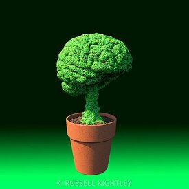 Brain in a Flowerpot #1 Green Gradient