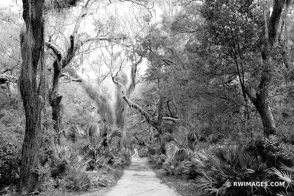COASTAL FOREST CUMBERLAND ISLAND GEORGIA BLACK AND WHITE