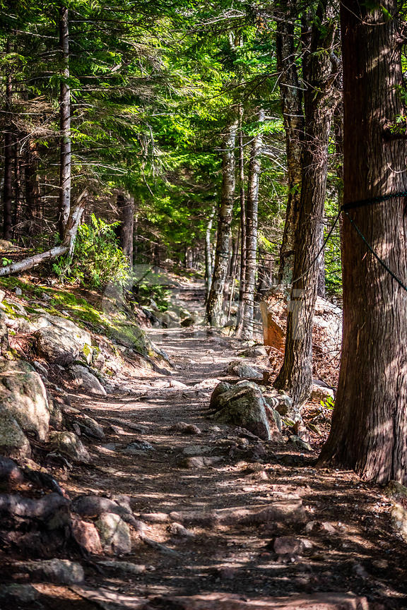 A gorgeous view of the forest in Acadia National Park, Maine