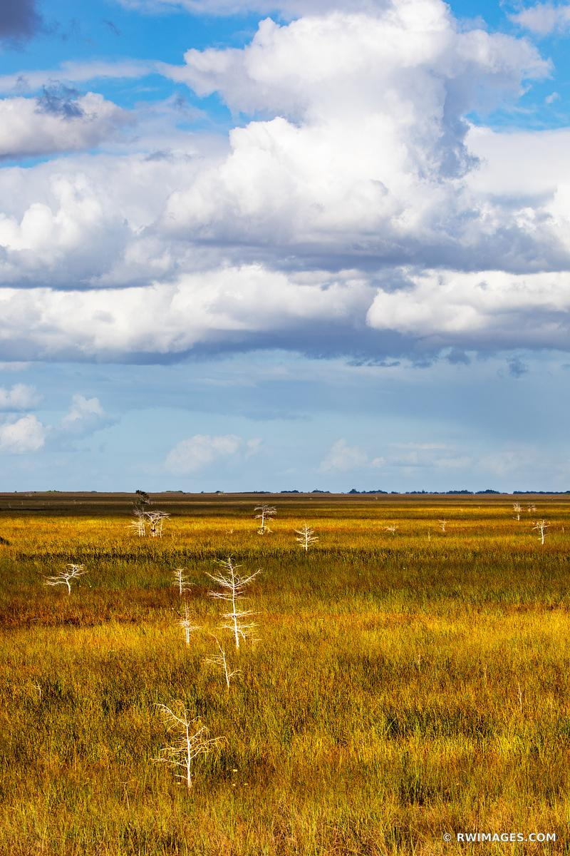 PA-HAY-OKEE PRAIRIE GRASSLANDS DWARF CYPRESS TREES EVERGLADES FLORIDA VERTICAL COLOR