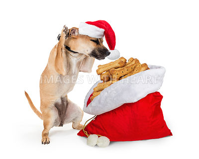 Excited Dog With Bag of Christmas Biscuits