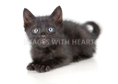 Black kitten with blue eyes lying down