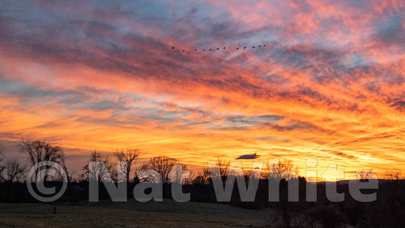 RC_super_sunset_with_geese-3979_January_02_2021_