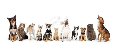 Dogs and Cats Looking Up Into Web Banner