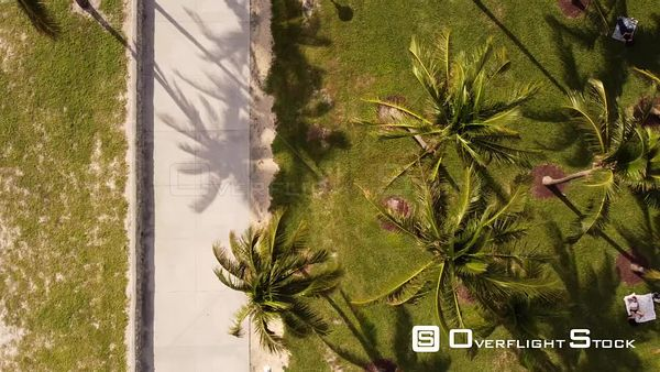 Aerial Miami Flying Over Palm Trees With a Drone 4k