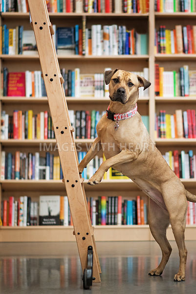 Pittmix_Standing_on_library_ladder