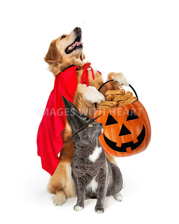 Large Dog and Cat Trick-or-Treating
