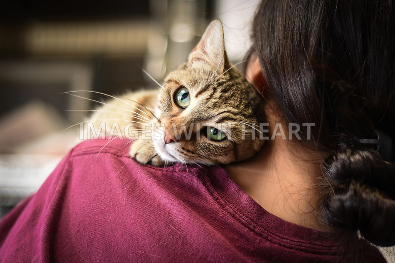 Tabby cat on woman's shoulder.