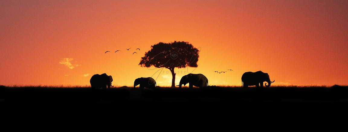 African Elephants Sunset Silhouette Web Banner