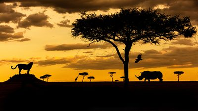 Kenya Africa Sunset Wildlife Scene