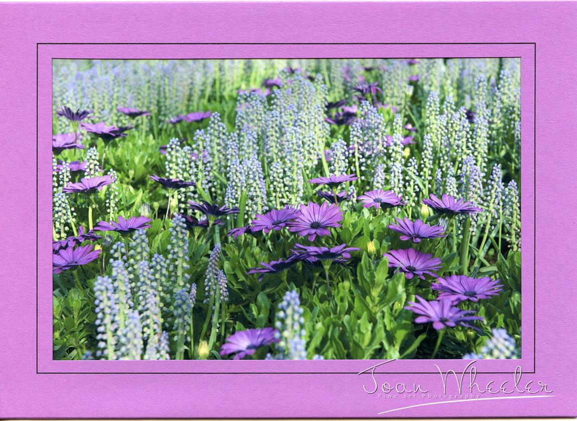 greeting_cards262