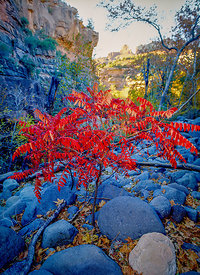 Autumn in the Canyon