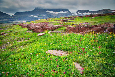 Wilflowers at Logan Pass #2