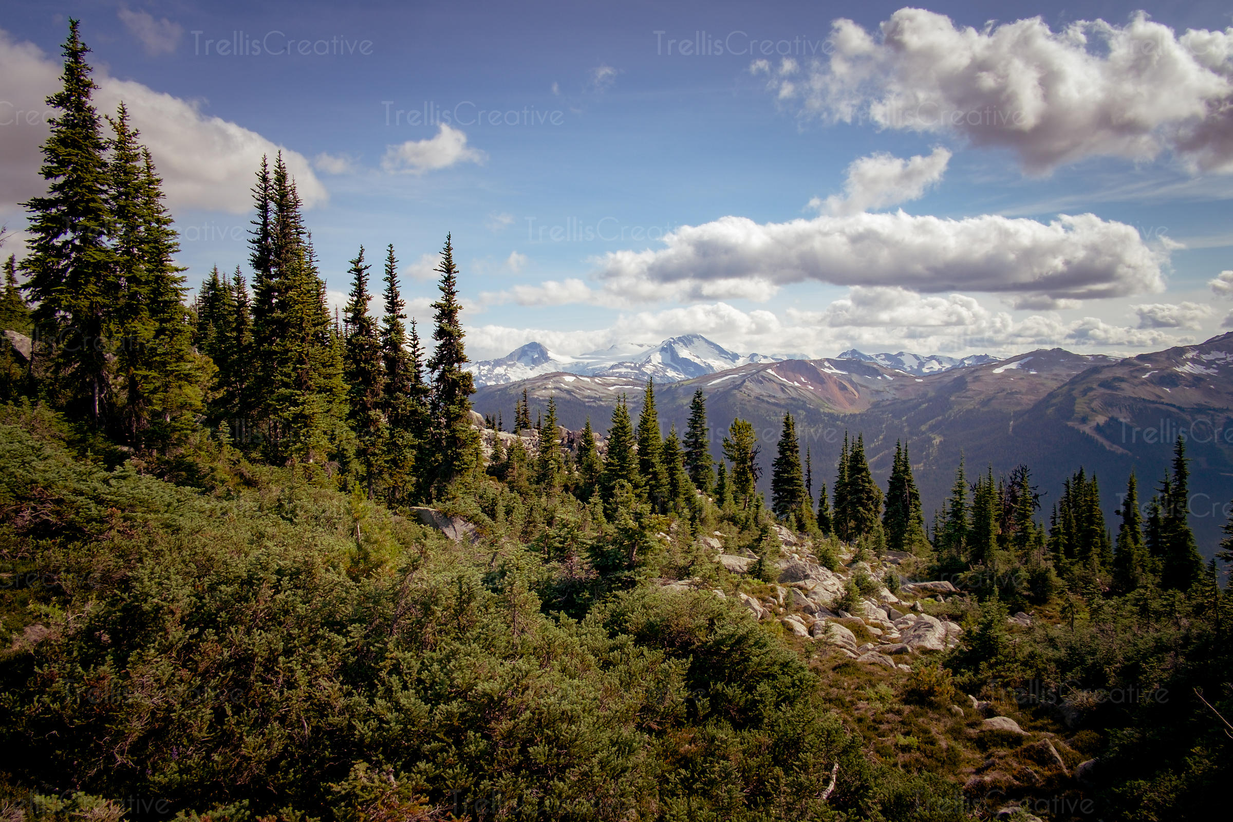 Epic view of forest and cloudscape, Blackcomb Mountain, Whistler, Canada.