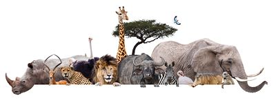 Safari Animals Together Isolated Banner Extracted