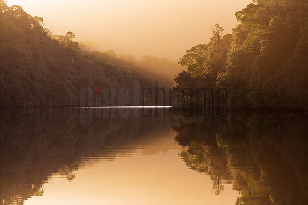 Rainforest Reflections on the Pieman River at Sunrise