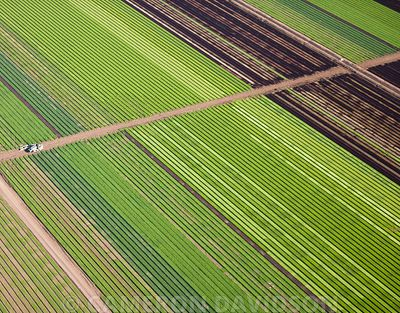 Farm Feilds aerial Arizona