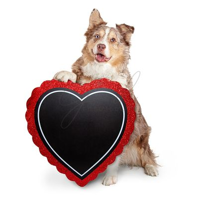 Senior Dog Carrying Blank Heart Sign