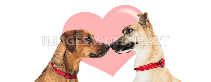 Two Dogs In Love Valentines Day Web Banner