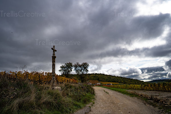 Dirt road leads to an old winery farmhouse in Burgundy, France