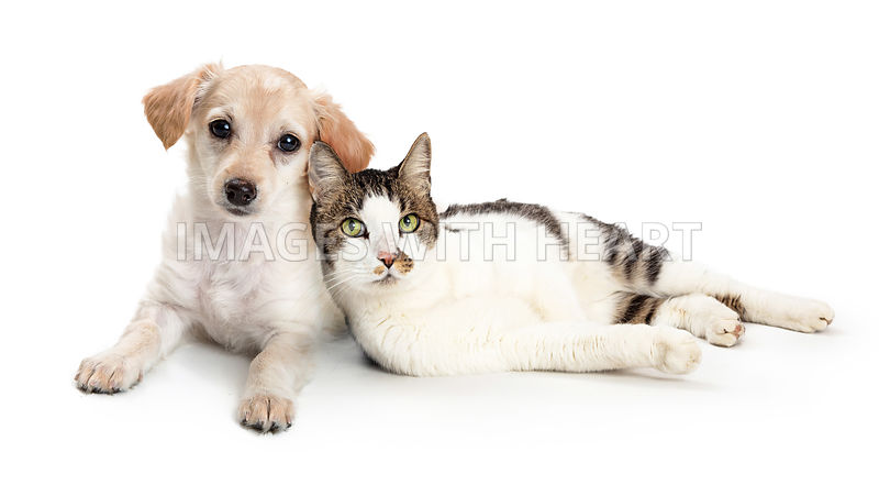 Cute Cat and Dog Snuggling Together