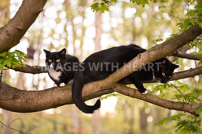 Two feral cats in tree