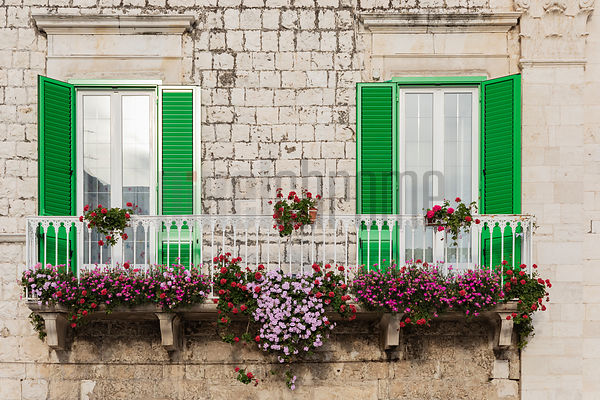Green Shutters and Flowers