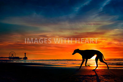 Single dog walking on beach sunset