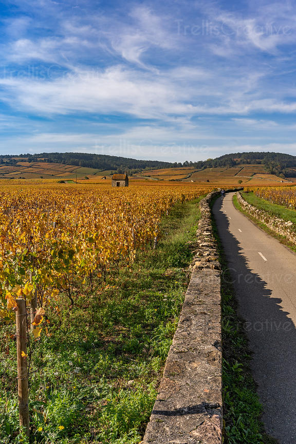 Bike path leading through famed Burgundy vineyards and wineries in France