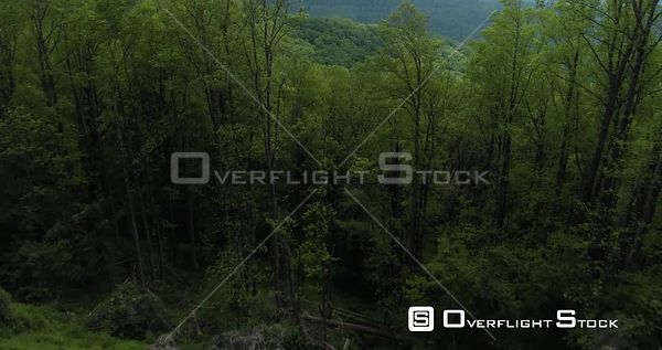 Cinematic fly through trees revealing Blue Ridge Mountains, USA