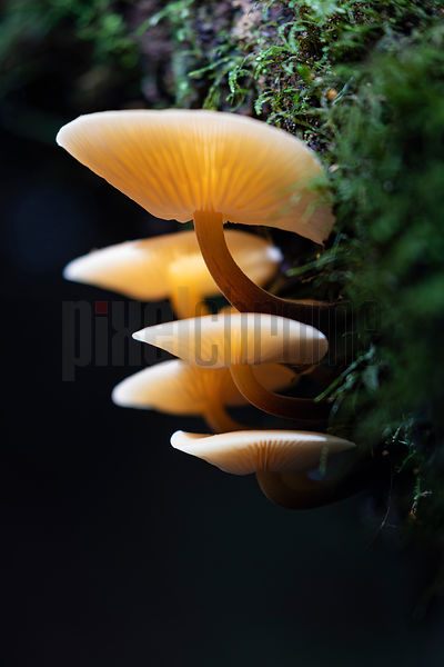 Mushrooms Growing on a Decaying Tree at Mt Field National Park