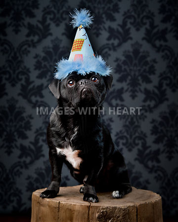 Black dog with birthday hat