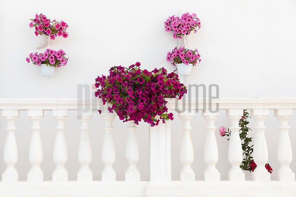 Flowers and a Balustrade