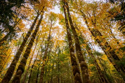 Forest trees in fall